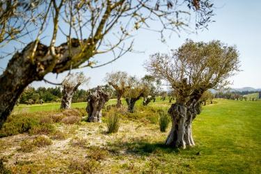 Hřiště ve starém olivovém háji