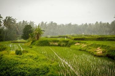 Na obědě koukáme na rýžové pole