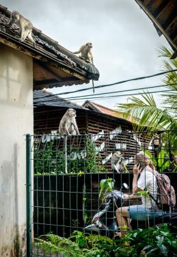 Moje oblíbená - opičí