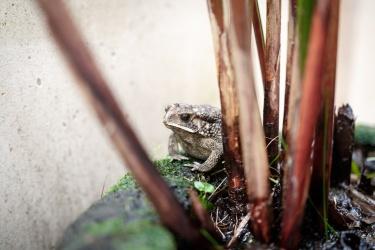 Žába na prameni. Vlastně na záchodě